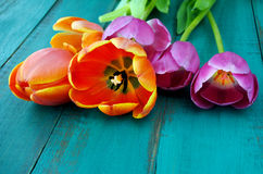 Tulip flowers bouquet background Stock Photography