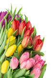 Tulip flowers. Bouquet fresh spring blooms water drops Royalty Free Stock Photography