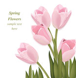 Tulip flowers bouquet greeting card. Spring is coming. Watercolor realistic decor Vector illustration Stock Photos
