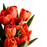 Tulip flowers bouquet Royalty Free Stock Photo