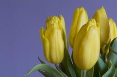 Tulip flowers Stock Photography
