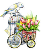 Tulip Flowers, canary bird and decorative birdcage. watercolor Stock Image