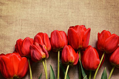Tulip flowers on canvas Stock Photography
