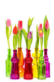 Tulip flowers in colorful glass vases over white background Royalty Free Stock Image