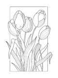 Tulip flowers coloring book vector illustration Stock Photography