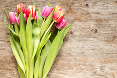 Tulip flowers with copy-space Royalty Free Stock Photos