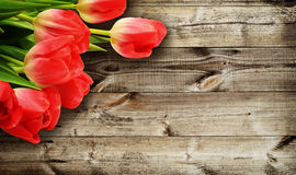Tulip flowers on dark wooden background Stock Photography