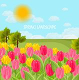 Tulip flowers field Vector. sunny day blue sky. Flat style Royalty Free Stock Photo