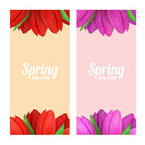 Tulip flowers frame composition. Royalty Free Stock Images