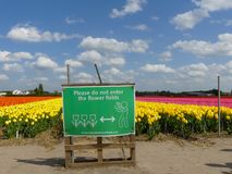 Tulip flowers glowing in warm sunshine fenced off by razor wire and warning no trespass sign. Lisse, the Netherlands - April 24 2019: fields of spring tulip stock photo
