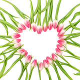 Tulip flowers heart Floral border Blooms isolated white Stock Photo