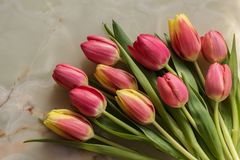 Tulip flowers on holiday background. Beautiful spring tulips at marble background royalty free stock image