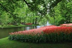 Tulip flowers , keukenhof garden  Holland Stock Photos