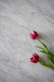 Tulip flowers on marble Stock Images