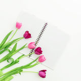 Tulip flowers and notebook on white background. Flat lay. Top view Royalty Free Stock Photography