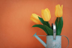 Tulip flowers on orange. Watering car with yellow tulip flowers bouquet on a orange background Royalty Free Stock Photos