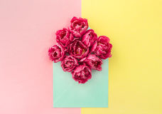 Tulip flowers Pink blossoms yellow paper Stock Image