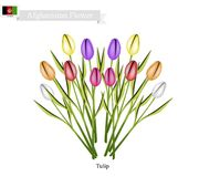 Tulip Flowers, The Popular Flower of Afghanistan Stock Images