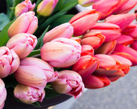 Tulip flowers for sale at the market Stock Photography