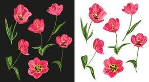 Tulip flowers set Stock Image