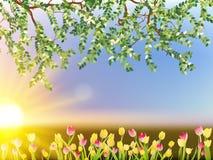 Tulip flowers on sky background. EPS 10 Royalty Free Stock Photos