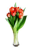 Tulip flowers in a vase Stock Photography