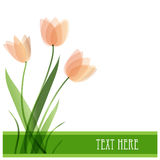 Tulip flowers. Vector background Stock Images