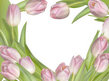 Tulip flowers on white background. EPS 10 Stock Image