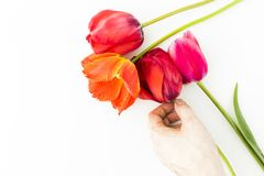 Tulip flowers on white table with human hand and copy space for. Tulip flowers on white table with copy space for your text top view Stock Photo