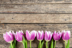 Tulip Flowers on Wooden Backdrop Royalty Free Stock Image