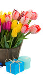 Tulip flowers in wooden pot with gift boxes Stock Images