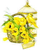 Tulip Flowers, zitronengelber Vogel und dekorativer Birdcage watercolor Lizenzfreie Stockfotos