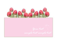 Tulip frame Stock Images