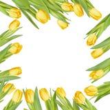 tulip frame. EPS 10 Stock Image