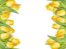 tulip frame. EPS 10 Stock Photography