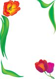 Tulip frame, vector Royalty Free Stock Photography