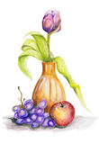 Tulip and fruits still life. Tulip flower in ceramic pot with grapes and apple still life  - handmade acrylic painting illustration on a white paper art Royalty Free Stock Images