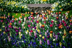 Tulip Garden Image stock