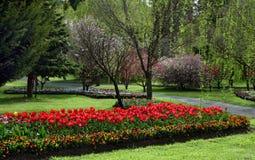Tulip Garden. In the springtime Stock Photo