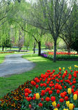 Tulip Garden Royalty Free Stock Photography