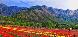 Tulip Garden stockbild
