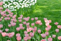 Tulip Garden photo libre de droits