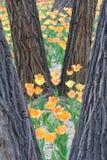 Tulip Garden Fotos de archivo