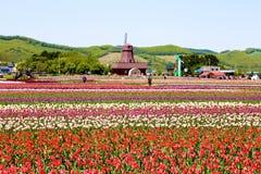 Tulip Garden Immagine Stock