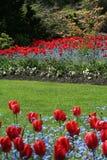 Tulip garden Stock Images