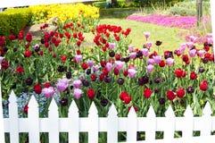 Tulip Garden Immagini Stock Libere da Diritti