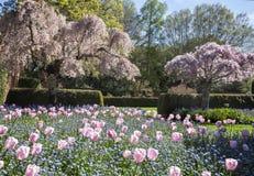 Tulip Garden Fotografía de archivo