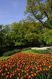 Tulip garden Stock Photos
