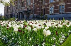 Tulip garden around the Rijksmuseum Stock Photos