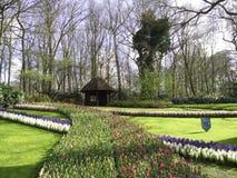Tulip garden. Caban trees ParterreDeFleurs Royalty Free Stock Photography